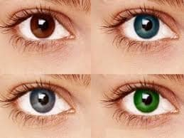 Complete Family Eye Care Contacts Thornwood, NY
